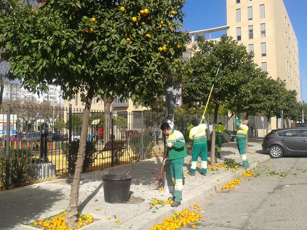 La recogida del fruto en la Calle Hespérides