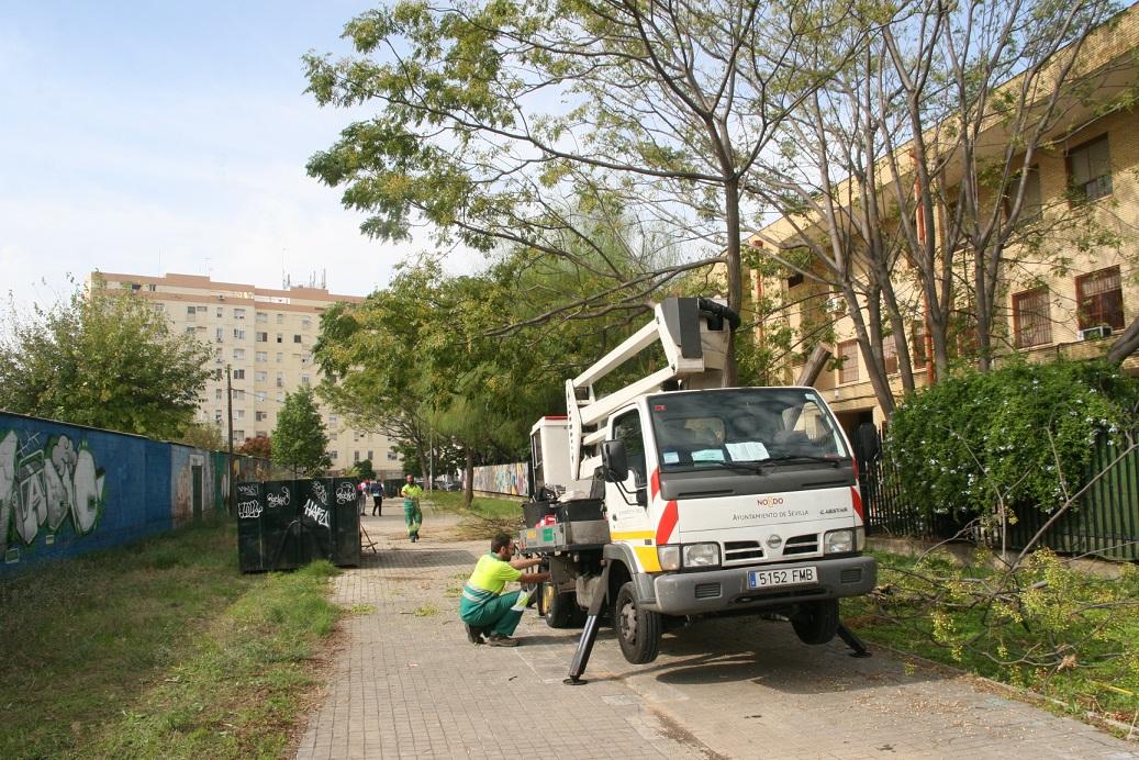 La grúa con brazo hidráulico es fundamental al tratarse de árboles de gran porte.