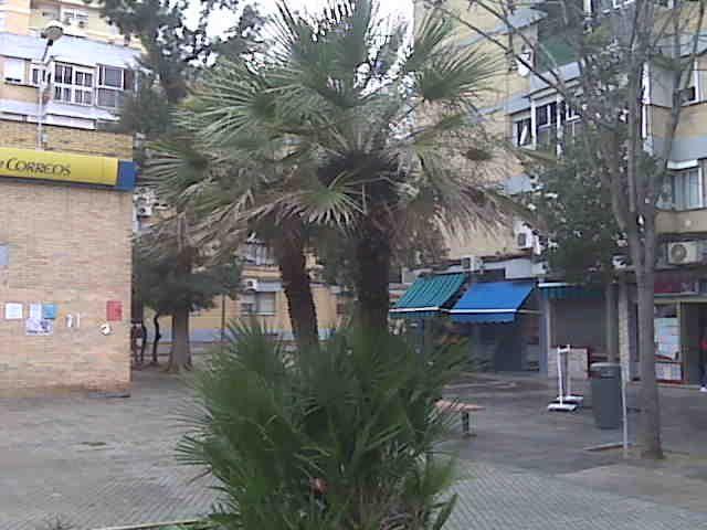 AVDA GAVILANES PALMERAS 2