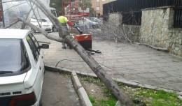 Árbol caído en la esquina de la calle Juan Pablos con Bogotá