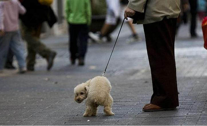 Campaña de concienciación contra los excrementos de perros