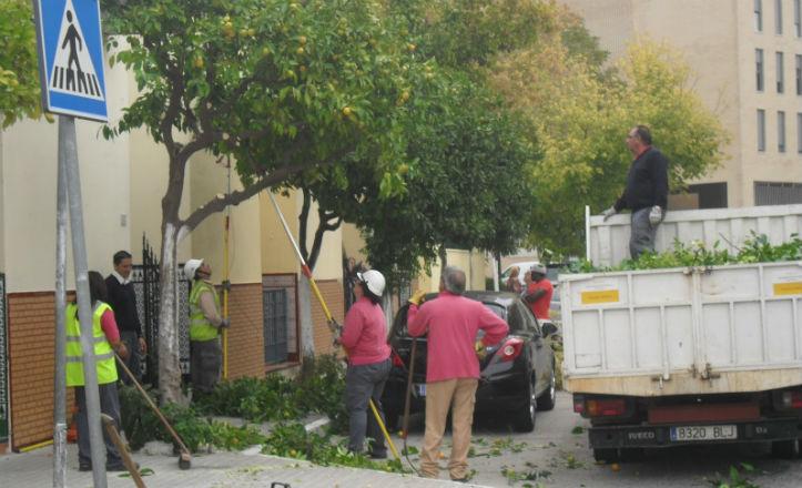 Poda de árboles en Sevilla