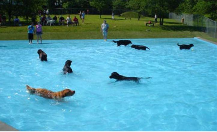 M s zonas para perros sevilla ciudad for Piscina perros