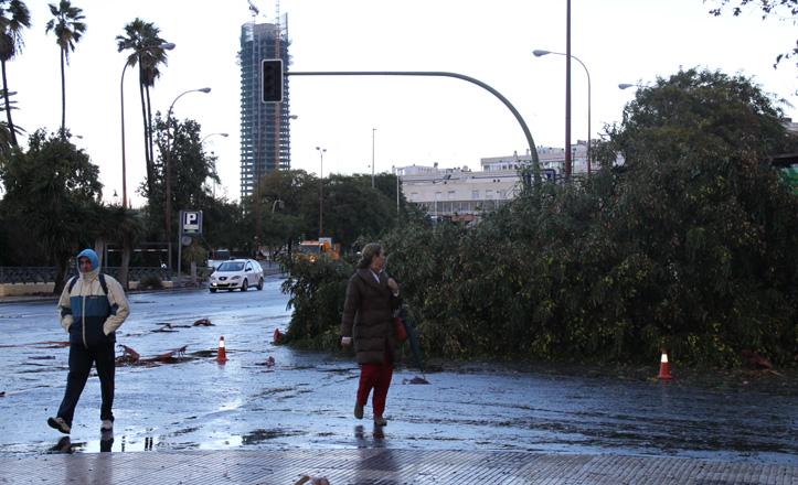 Los viandantes miran asombrados el enorme árbol caído sobre el kiosco