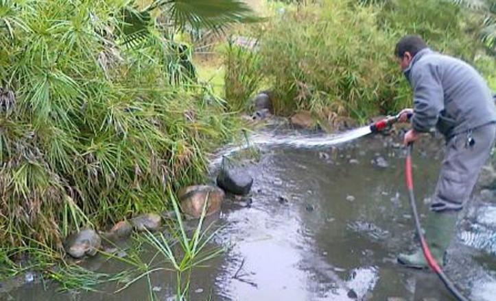 Un jardinero limpiando el estanque