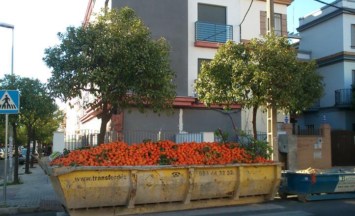 naranjas-barrio-santajusta