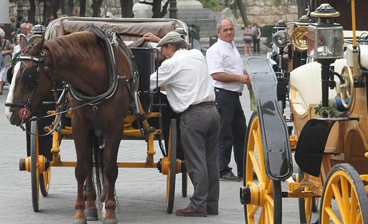 coches-caballo-catedral