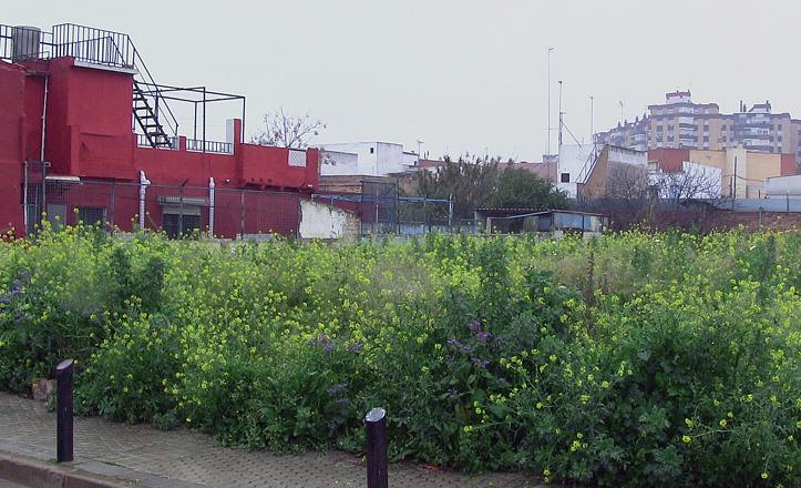 hierbas-barrio-jesusmariayjose