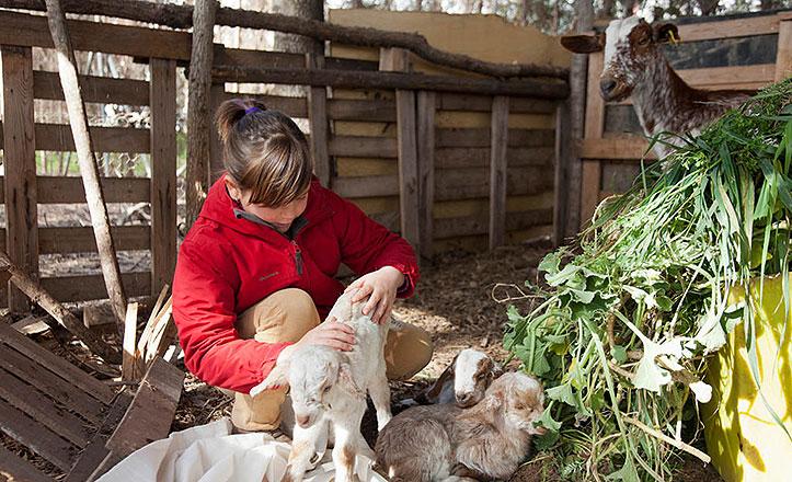 cabras-san-jeronimo