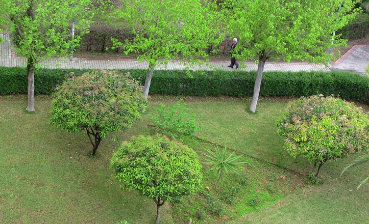 parque-sandiego-árboles