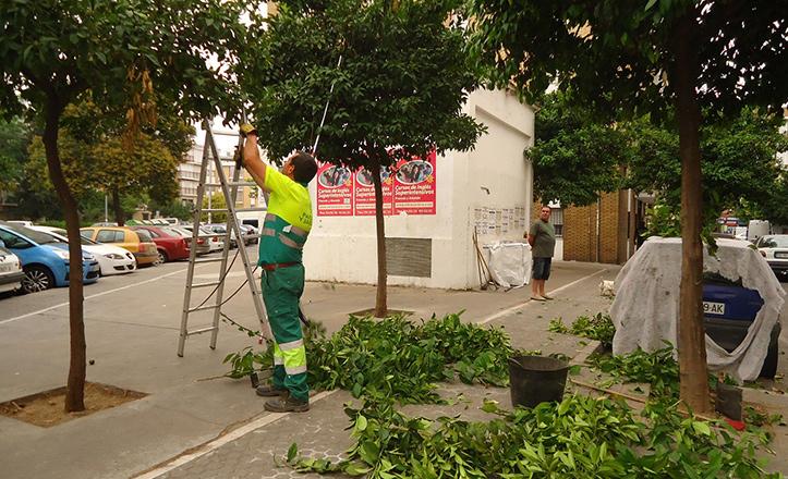 Casi 5.000 podas realizadas en el Distrito Macarena