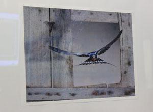 Los Remedios inaugura el otoño cultural con la exposición «Aves de Sevilla»