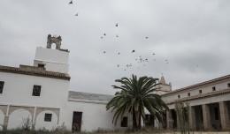 molino-aceite-miraflores