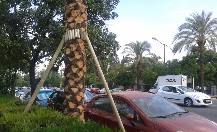nuevas-palmeras-avenida-palmera