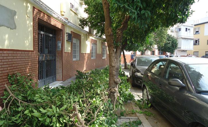 Poda de naranjos en la Plaza Fernando Barquín