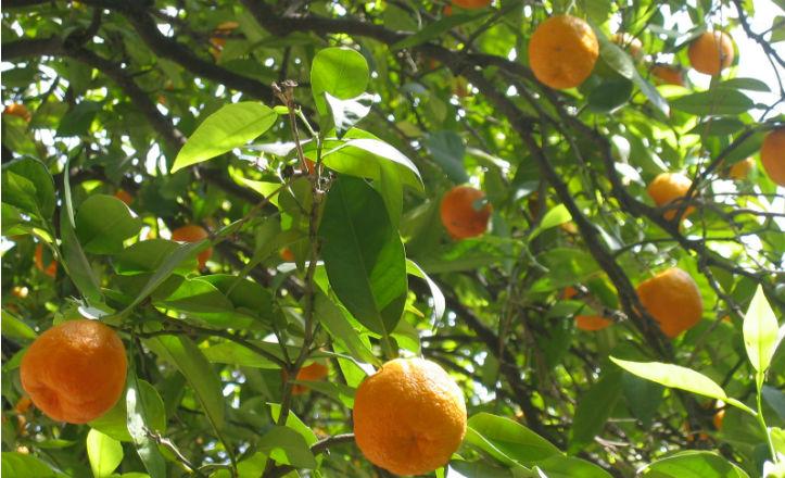 naranjo-sevilla