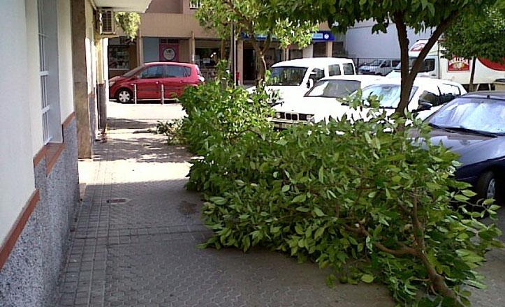 Nueva poda de mantenimiento en la Calle Azahar