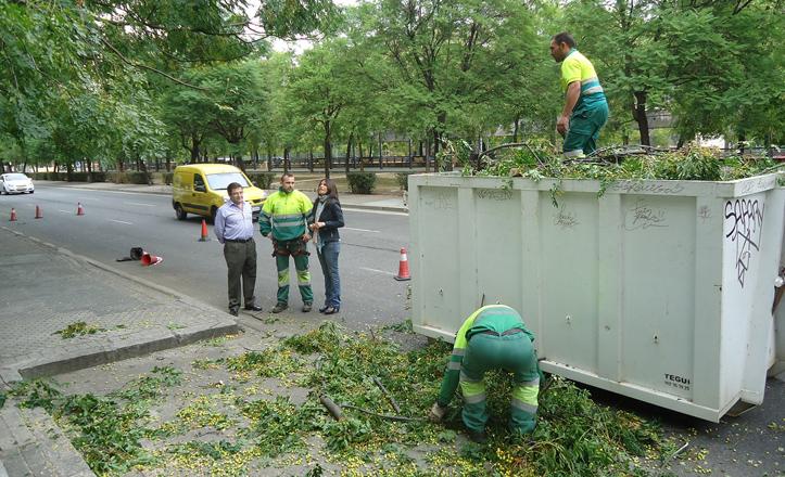 Le delegada, Evelia Rincón, comprueba los trabajos que están ejecutando los operarios de parques y jardines