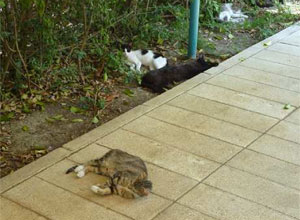 Gatos urbanitas en peligro