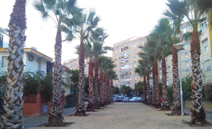 palmeras-podadas-juanxxiii