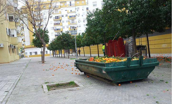 recogida-naranjas-norte
