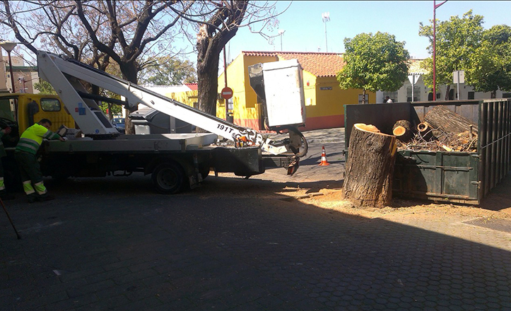 Tala de un árbol en la calle Joaquín Cortés