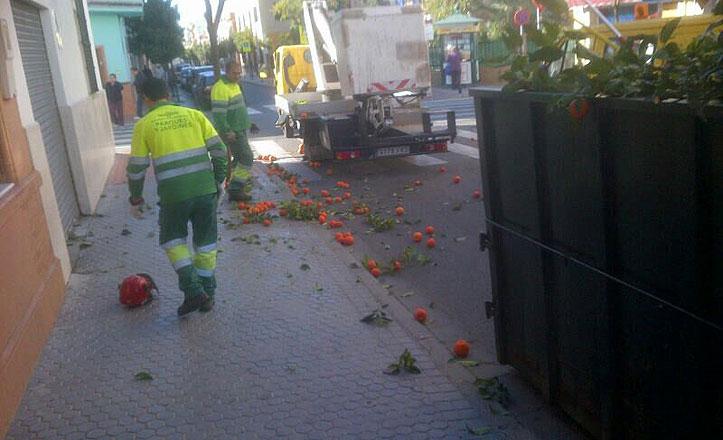 Labores de poda y recogida de naranja amarga en la calle Guadalajara