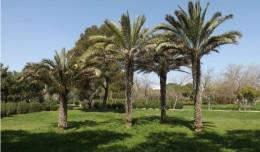 Espacios verdes Parque Amate