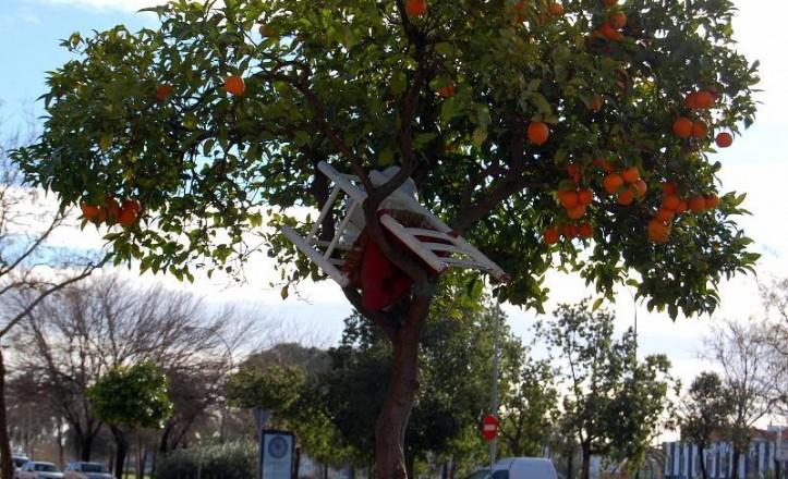 fruto.naranjo.30.04.14.01.jpg