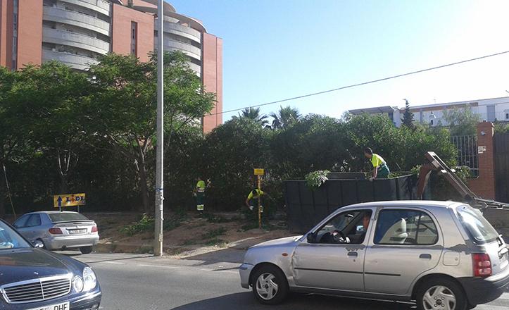 Los árboles de la zona del St. Mary School, en plena poda