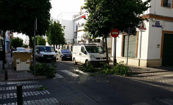 Poda de los árboles en la calle Cristo de la Sed