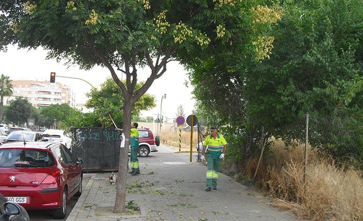 Continúan las podas en el Distrito San Pablo-Santa Justa