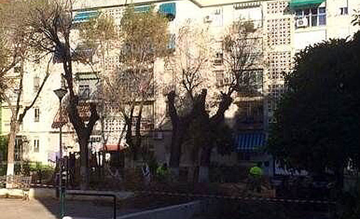 Talan de urgencia once olmos en la plaza del Kirri