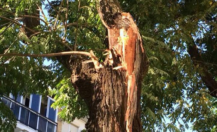 Detalle del árbol al que se le ha desprendido la rama en Triana