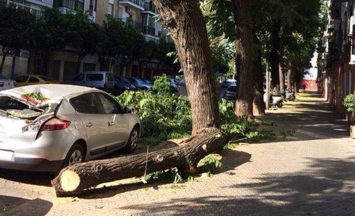 Rama caída esta mañana en la calle Juan Diaz de Solis