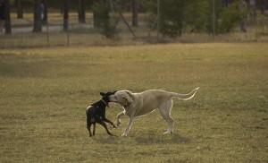 Los perros cuentan con media hectárea de esparcimiento en el parque / F.P.