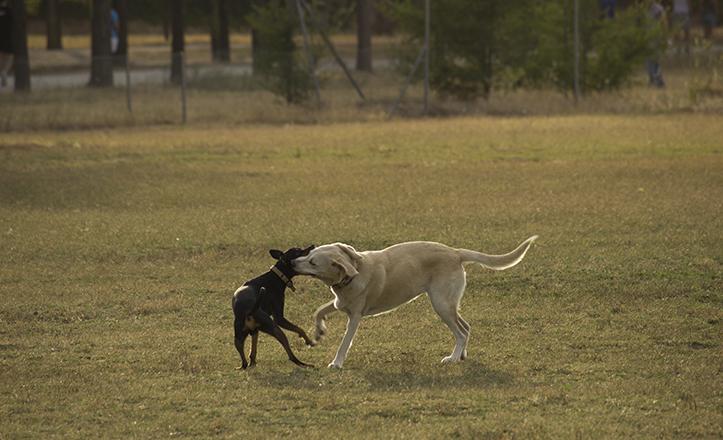 El Parque Infanta Elena pone a disposición de los perros media hectárea de extensión, y agility / F. Piñero