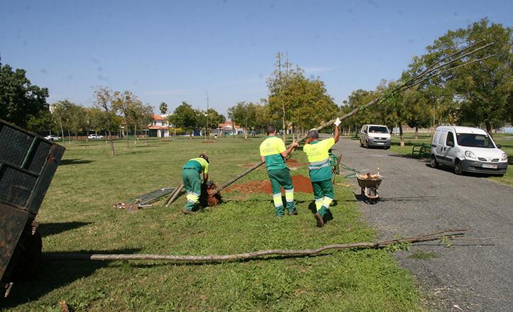 Operarios del Ayuntamiento plantan acacias en el Parque Santa Clara
