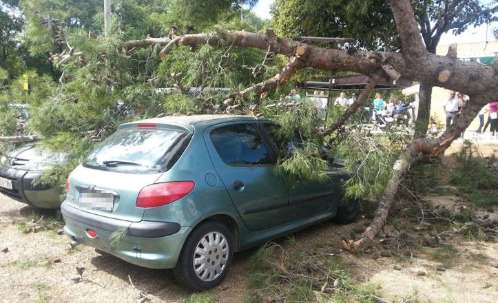 IU alerta de la caída de árboles en el bulevar de la avenida de la Paz por falta de poda