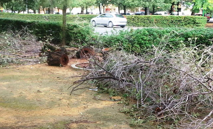 IU denuncia que los árboles de la avenida de la Paz siguen cayéndose