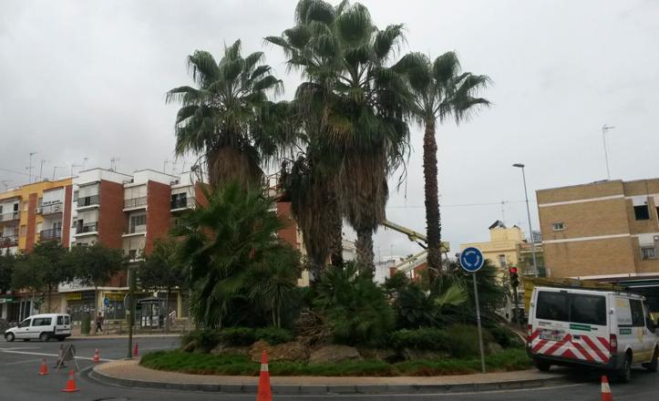 Poda de las palmeras de la glorieta del «Movimiento vecinal»