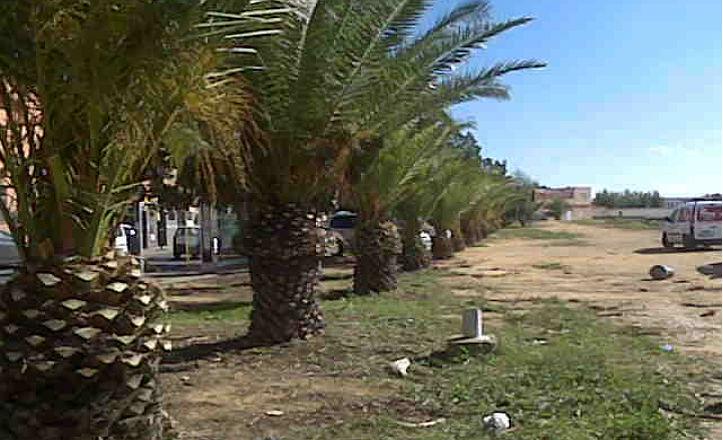 poda-palmeras-cerro