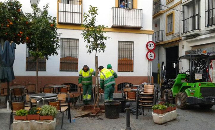 Prosigue la campaña «Apadrina un árbol» en el Casco Antiguo