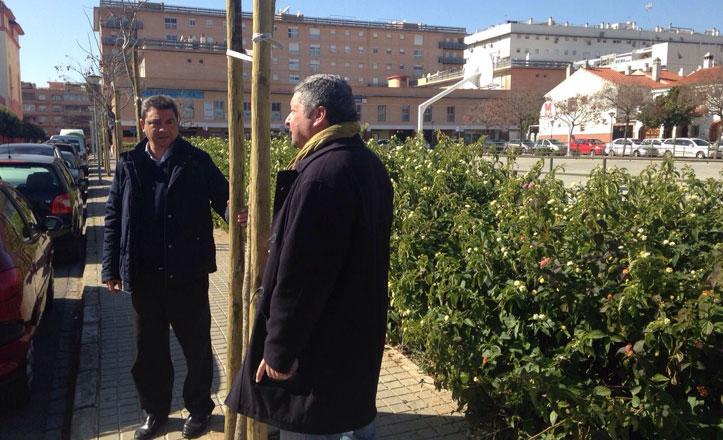 Replantación de más de 330 árboles en el distrito Este-Alcosa-Torreblanca