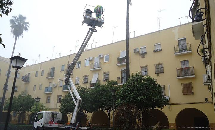 Desmochado de palmeras en la plaza de la Barzola