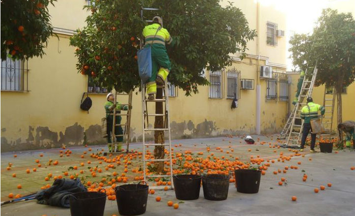 recogida-naranja
