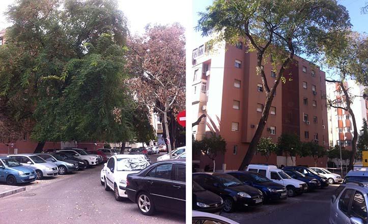 La calle Caños de Carmona, antes y después de la poda