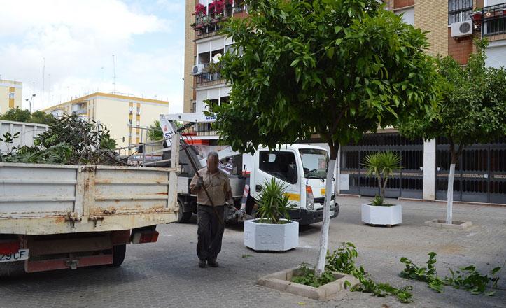 Poda de naranjos en la calle Doctor Morote Calafat
