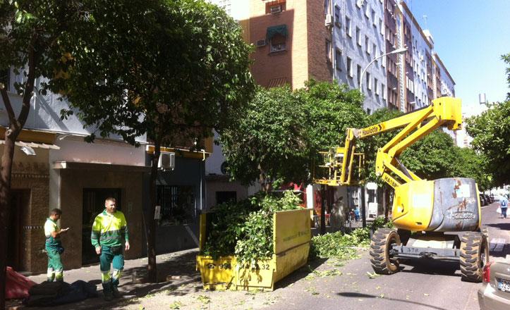 Continúa la poda en el Distrito Nervión en la calle Manuel Casana