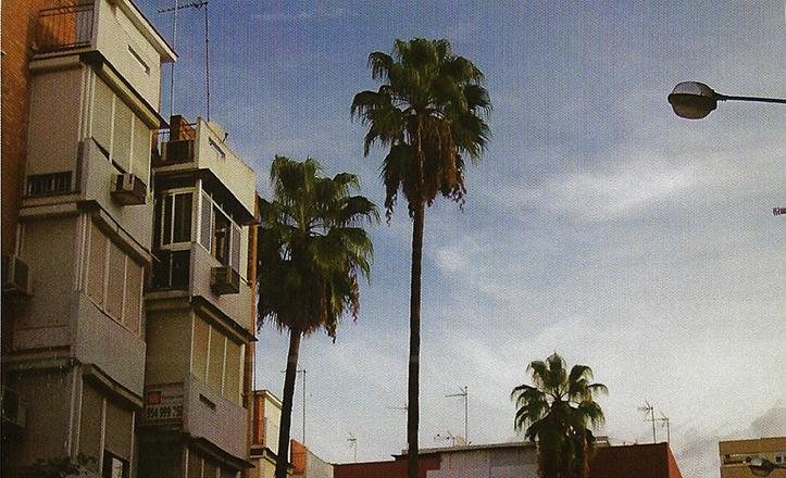 En la calle Bulerías se encuentran tres esbeltas palmeras Washingtonia / F.J. López González de Los Ríos